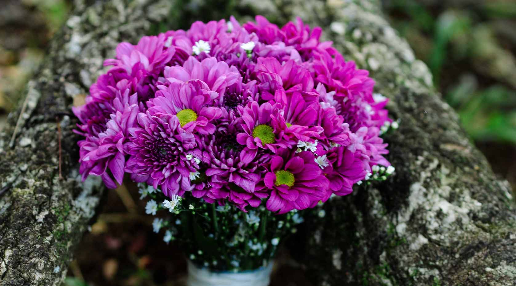 Purple daisy bouquet.